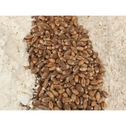 Farine de blé bio -...